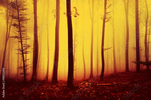 Staande foto Meloen Fire red saturated autumn season foggy forest landscape background. Oversaturated yellow red forest trees background.