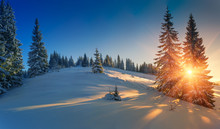 View Of Snow-covered Conifer Trees And Snow Flakes At Sunrise. Merry Christmas's Or New Year's Background.