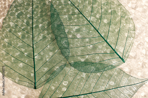 Photo sur Aluminium Squelette décoratif de lame Abstract skeleton leaves background