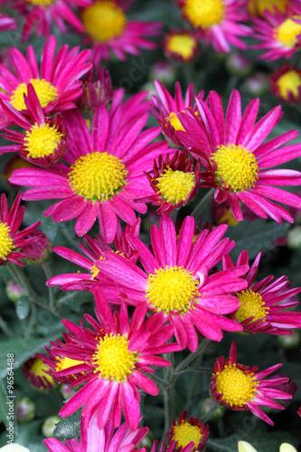 fototapeta na lodówkę Close-up flower ..