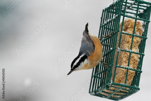 Aufkleber - Red-breasted Nuthatch On A Feeder