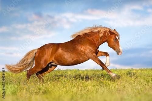 Fényképezés  Red horse
