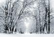 Leinwandbild Motiv Winter scenery, snowstorm in park