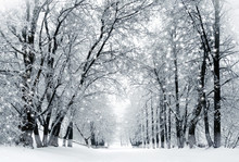 Winter Scenery, Snowstorm In P...