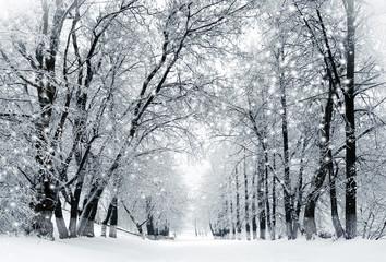 Fototapeta Zima Winter scenery, snowstorm in park