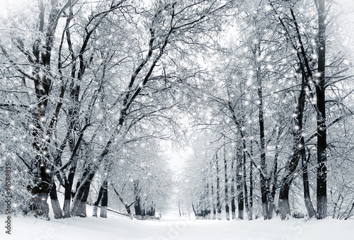 Winter scenery, snowstorm in park Wallpaper Mural