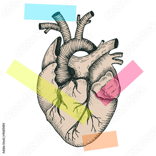 anatomiczne-serce