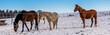 Panorama Pferde Winterimpressionen