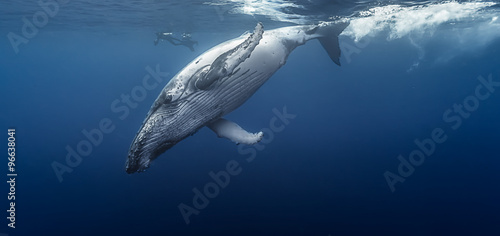 Photo  Gorgeous humpback whale, Réunion island - France.
