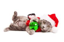 Cute Playful Christmas Kitten