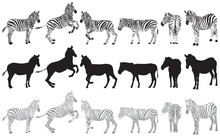 Set Of Zebra On A White