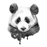 Panda.Black and white. Isolated - 96650089