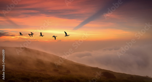Poster Corail Birds at sunrise or sunset autumn concept