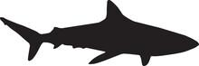 Shark Silhouette Logo