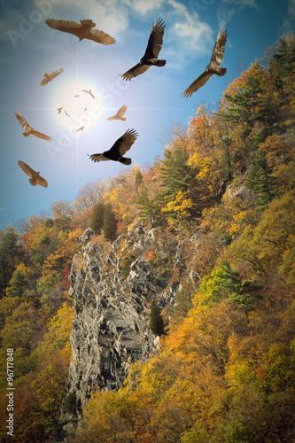 Fotografie, Obraz  Circling Vultures
