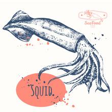 Sketch Of Squid. Hand-drawn Calamari. Restaurant Design.