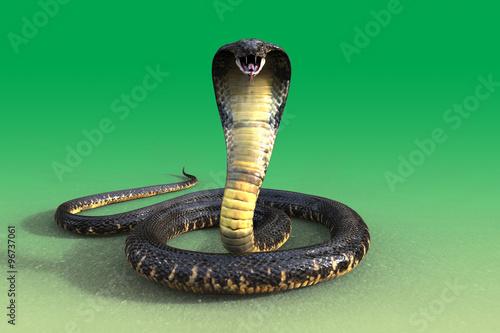 Fotomural 3d King cobra snake isolated on green background