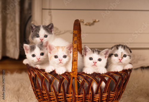 Five cute kittens in braided basket - 96770280