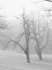 black and white photo of trees with bare crooked branches in the mist