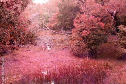 Fotobehang Candy roze mistery red forest