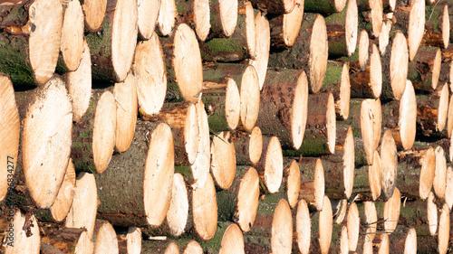 In de dag Brandhout textuur Wooden Logs