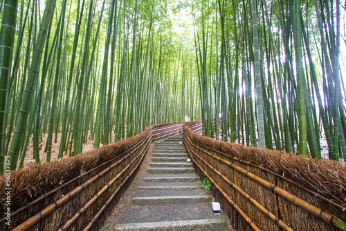 Foto op Canvas Bamboo Bamboo Grove in Kyoto Japan