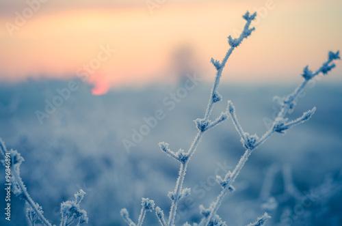 Fotografía  Piante controluce al mattino in inverno