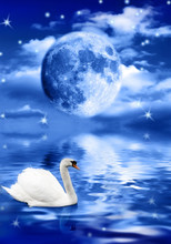 White Swan In Water And Full Moon