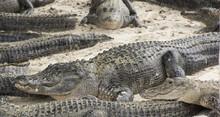 Miami, Florida, USA - Everglad...