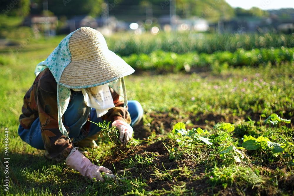 Fototapety, obrazy: farmworking person in rural area - 田舎の集落で農作業・畑仕事をする高齢者