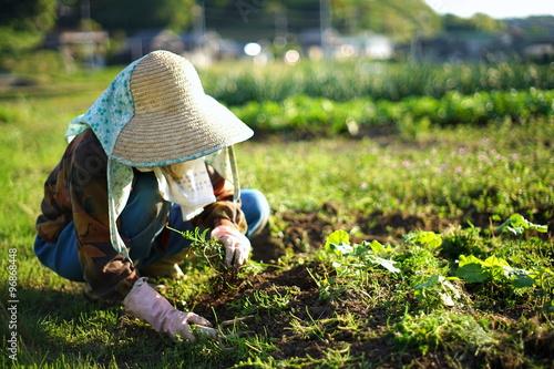 Foto  farmworking person in rural area - 田舎の集落で農作業・畑仕事をする高齢者