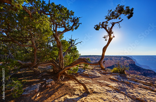 Tuinposter Canyon Grand Canyon, Geäst bei Hopi Point