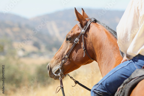 A bay horse and cowboy overlooking the valley on a long distance trail ride.