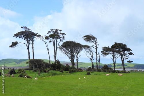 Photo  Green pastures