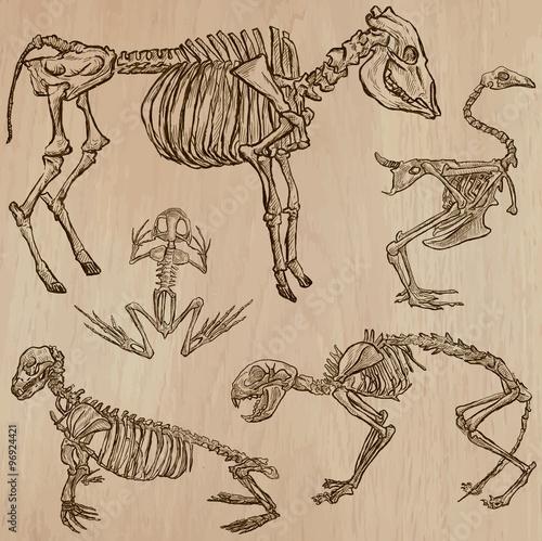Plakat na zamówienie Zwierzęce szkielety