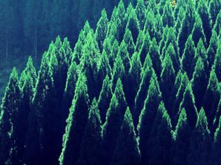 Panel Szklany Las 浮羽の杉