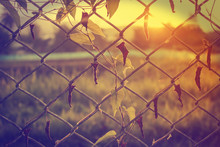 Old Fence With Vine In Vintage Style
