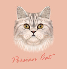 Persian Cat Purebred Animal Cute Face. Vector Funny White Tabby Gray Cat Head Portrait. Realistic Fur Portrait Of Green Eyes White Persian Kitten Isolated On Pink Background.