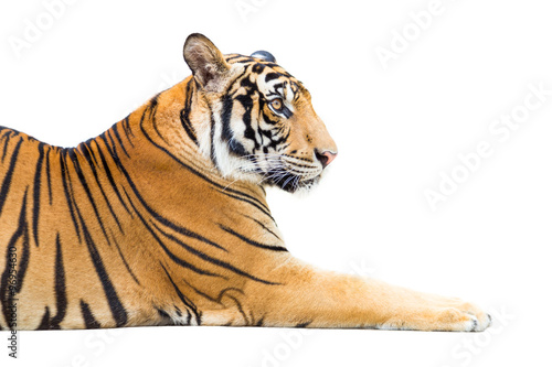 In de dag Panter Young tiger isolated on white background