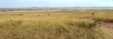 Fototapeta Sawanna - Savannah panorama in the National park of Kenya