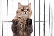 Cute Tabby Cat Looking