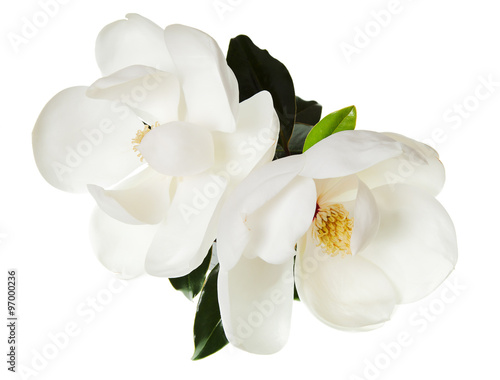 Door stickers Magnolia Magnolia Flower White Magnolias Floral Tree Flowers
