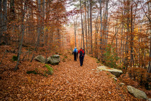 Walkers On Path Of Golden Autumn Leaves In A Forest In Corsica