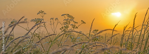 Hazy sunrise over a field in spring  - 97039042