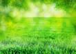 Leinwandbild Motiv grass background