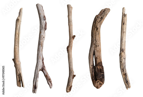 Fotografia  Set of dry tree branch