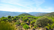 Parque Natural Sierra De Andújar, Sierra Morena, Provincia De Jaén, España