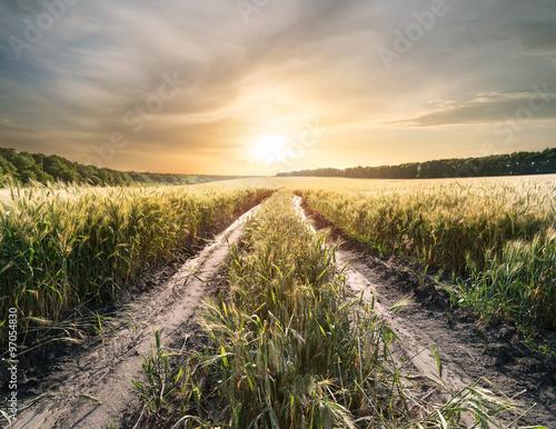 Spoed Foto op Canvas Grijze traf. Country road in field with ears of wheat