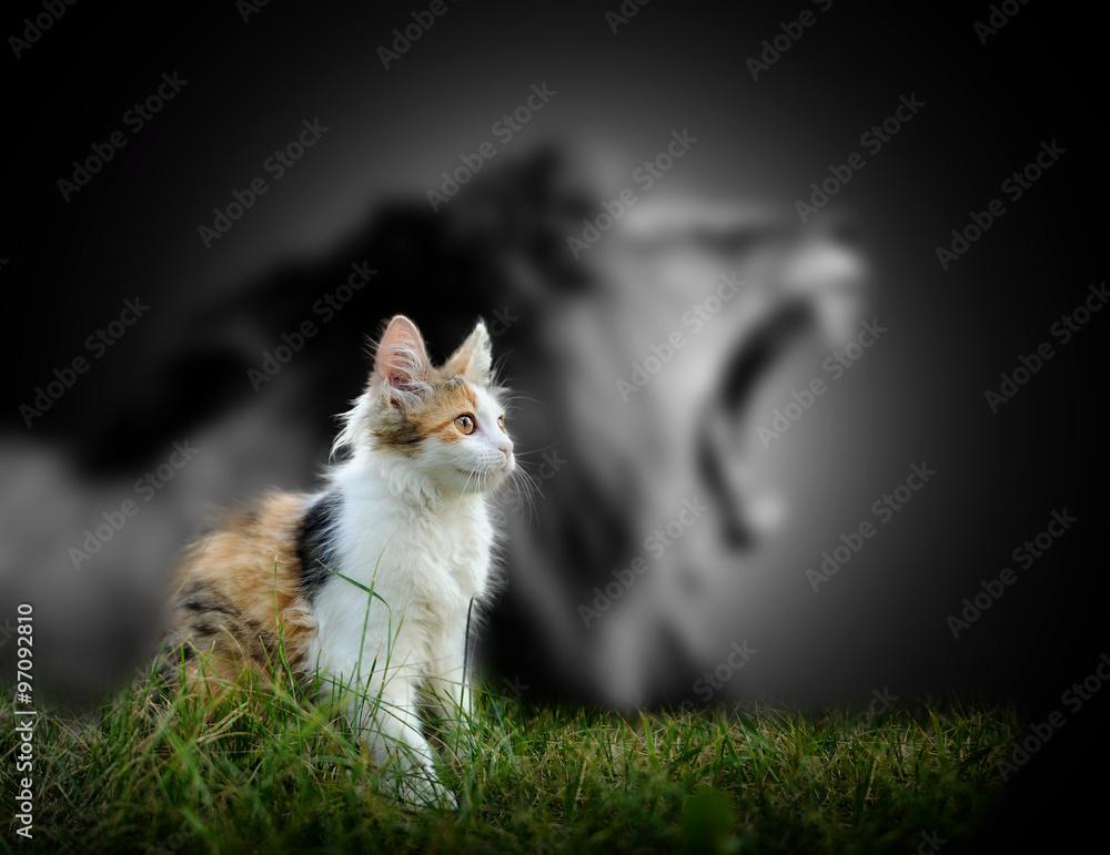 Fototapeta Cat with lion shadow
