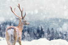 Deer On Winter Background